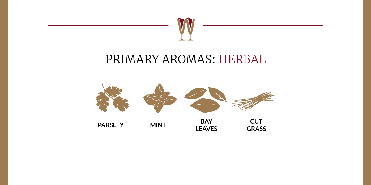 Art showing a selection of herbal primary aromas in wine for beginners