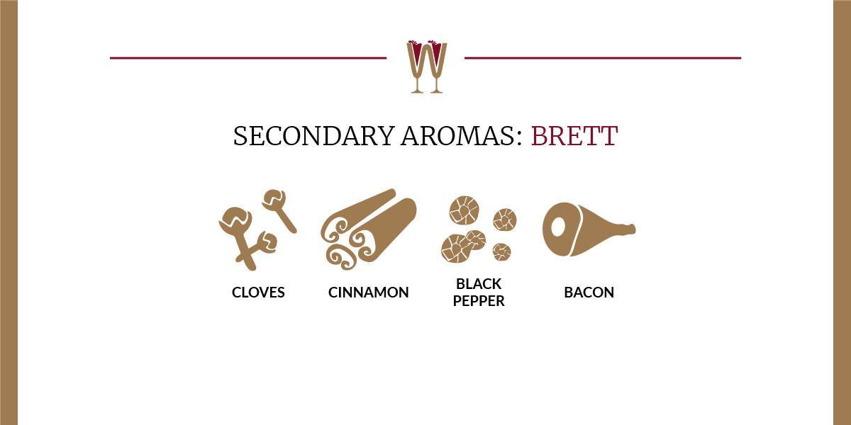 Art showing a selection of Brettanomyce secondary aromas in wine for beginners