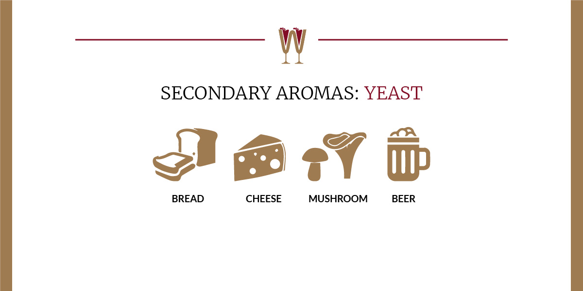 Art showing a selection of yeasty secondary aromas in wine for beginners